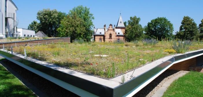 Den Lebensraum aufs Dach nehmen – so sieht die Idealvorstellung von Ökologen aus. - © Optigrün, Mann