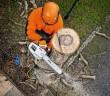 Mit der neuen Tophandle-Motorsäge Stihl MS 201 TC-M können sich Baumpfleger dank des elektronischen Motormanagements M-Tronic voll und ganz auf ihre Arbeit konzentrieren und Zeit sparen. - © Stihl