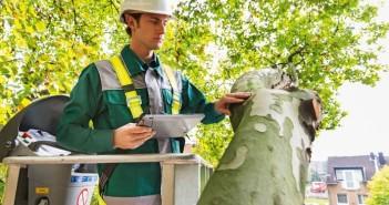 Bäume in deutschen Städten können schon bei moderaten Windverhältnissen zur Gefahr werden, warnt Dekra. - © Dekra
