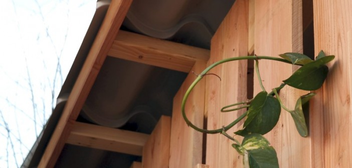 Damit Kletterpflanzen ausreichend Licht bekommen, sollten sie vor allem auf der Süd- und Westseite des Hauses angepflanzt werden. - © Deutsche Bundesstiftung Umwelt