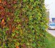 Das Lärmschutzsystem Helix Compacta ist platzsparend, flexibel einsetzbar und durch die integrierte Bepflanzung von Anfang an beidseitig begrünt.