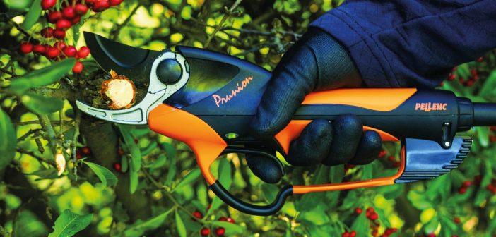 Baumpflege: Energetisch nicht klamm am Stamm!